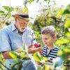 En Steck Eefel fer desch: Die Apfelbaumpatenschaft im GesundLand Vulkaneifel
